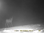spy-cam-kudu-bull