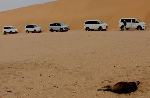 dead seal in dunes 1