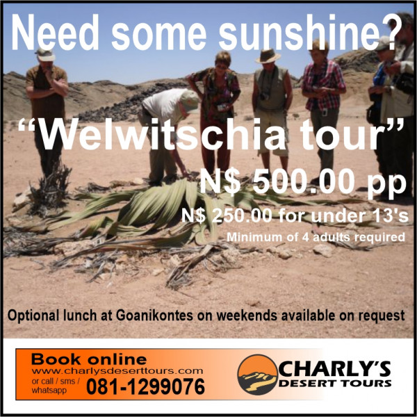 Welwitschia special3